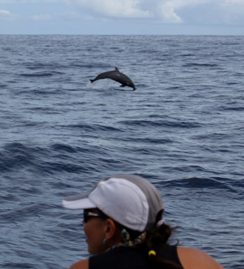 Dolphin Watching Tours in Drake Bay, Costa Rica