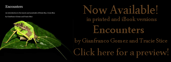 Preview Gian and Tracie's new book: Encounters: An introduction to the insects and arachnids of Drake Bay, Costa Rica