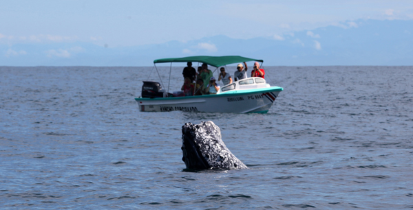 Whale Watching in Drake Bay, Costa Rica
